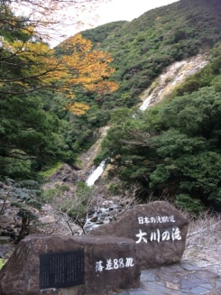 屋久島エイジングセラー 6